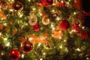 Tony and the Real Christmas Tree Prank