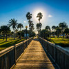 33721369-the-sun-shining-through-palm-trees-and-a-fishing-pier-in-daytona-beach-florida