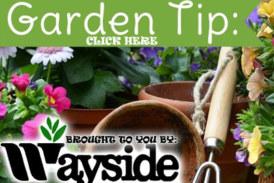 Wayside Gardening Tip #2