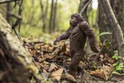 Woman Blames Her Car Accident on Bigfoot