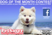 Pet Saver Dog Of The Month | October 2018
