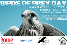 Birds Of Prey Day At Wild Wings