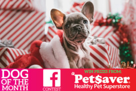 PETSAVER Dog Of The Month Contest