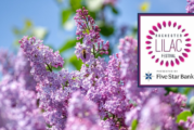 The 2021 Rochester Lilac Festival is Happening!