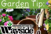 Wayside Gardening Tip #1