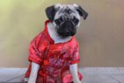 Fashion First: kimono