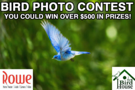 BIRD PHOTO CONTEST